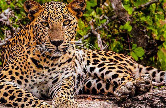 Trésors naturels de Sri Lanka